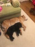 and our dogs finally get along